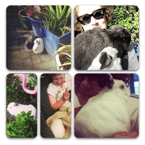 Our much loved and missed Bolt and Mr Bunsy