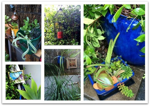 Kimba Likes to Garden like a Granny - a little tour around my tropical cottage garden