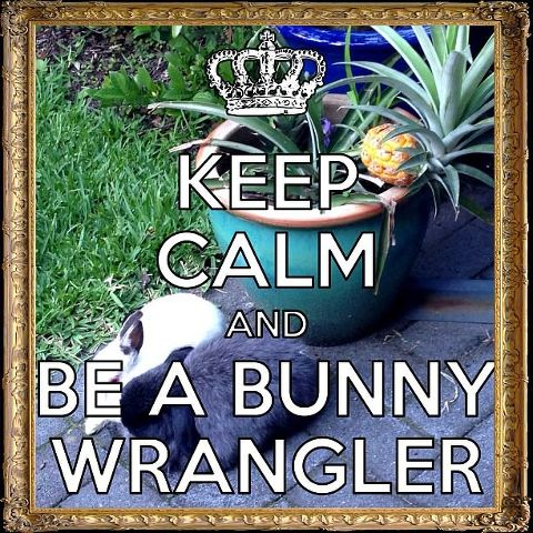 Keep Calm and be a bunny wrangler