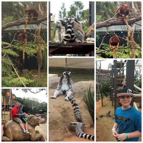 Festival of Kimba birthday weekend | Taronga Zoo with a couple of monkeys plus some tree kangaroos and ringtailed lemurs