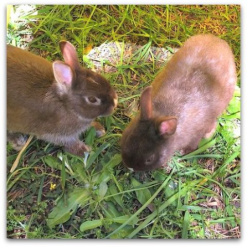 Kimba Likes Pet Bunnies. Meet my bunny bros - two gorgeous wee Netherland dwarf rabbit brothers named Lord Carrot and Bowie Bonbon