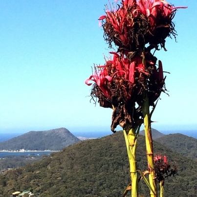 What to do in Nelson Bay and Port Stephens - scenic drives